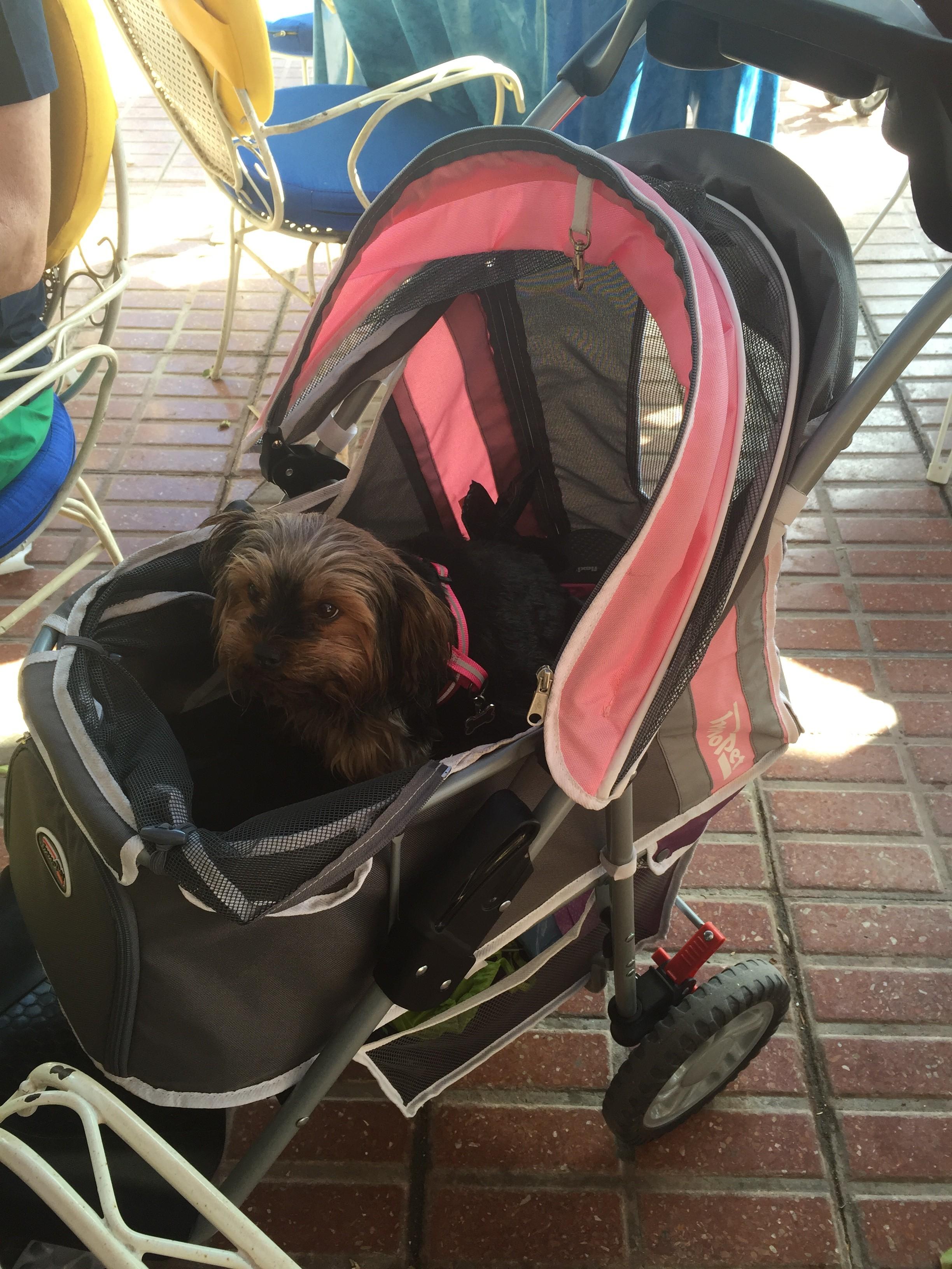 Finns ett nät som man kan stänga om vagnen, vilket gör den rymningssäker. Hunden hette Emelie.
