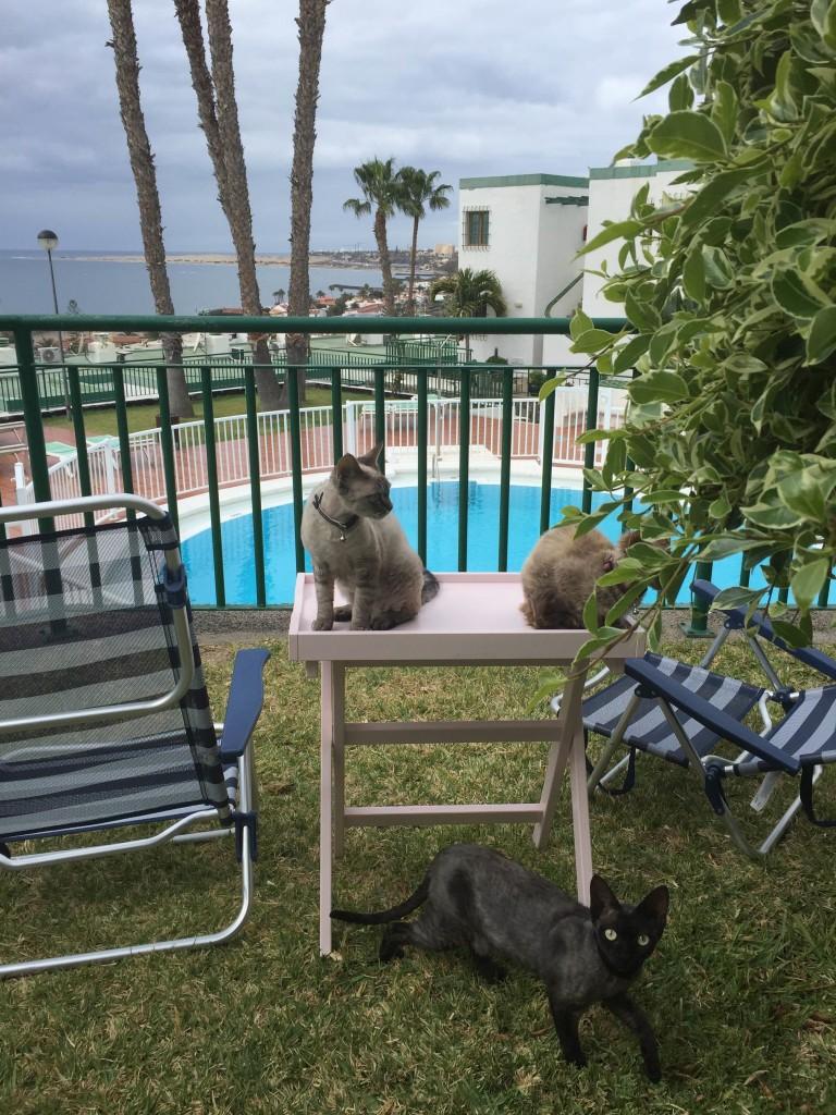 Katterna älskar detta liv!