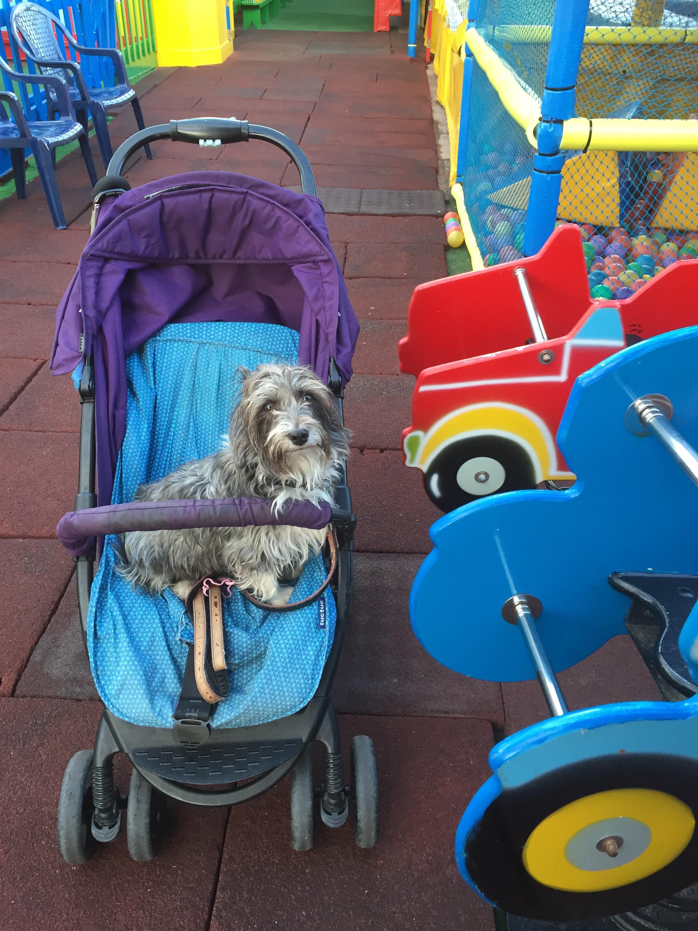 Kompisens hund Paula följde med oss till leklandet. En hemlös gatukorsning som familjen tagit hand om. En helt underbar hund!!