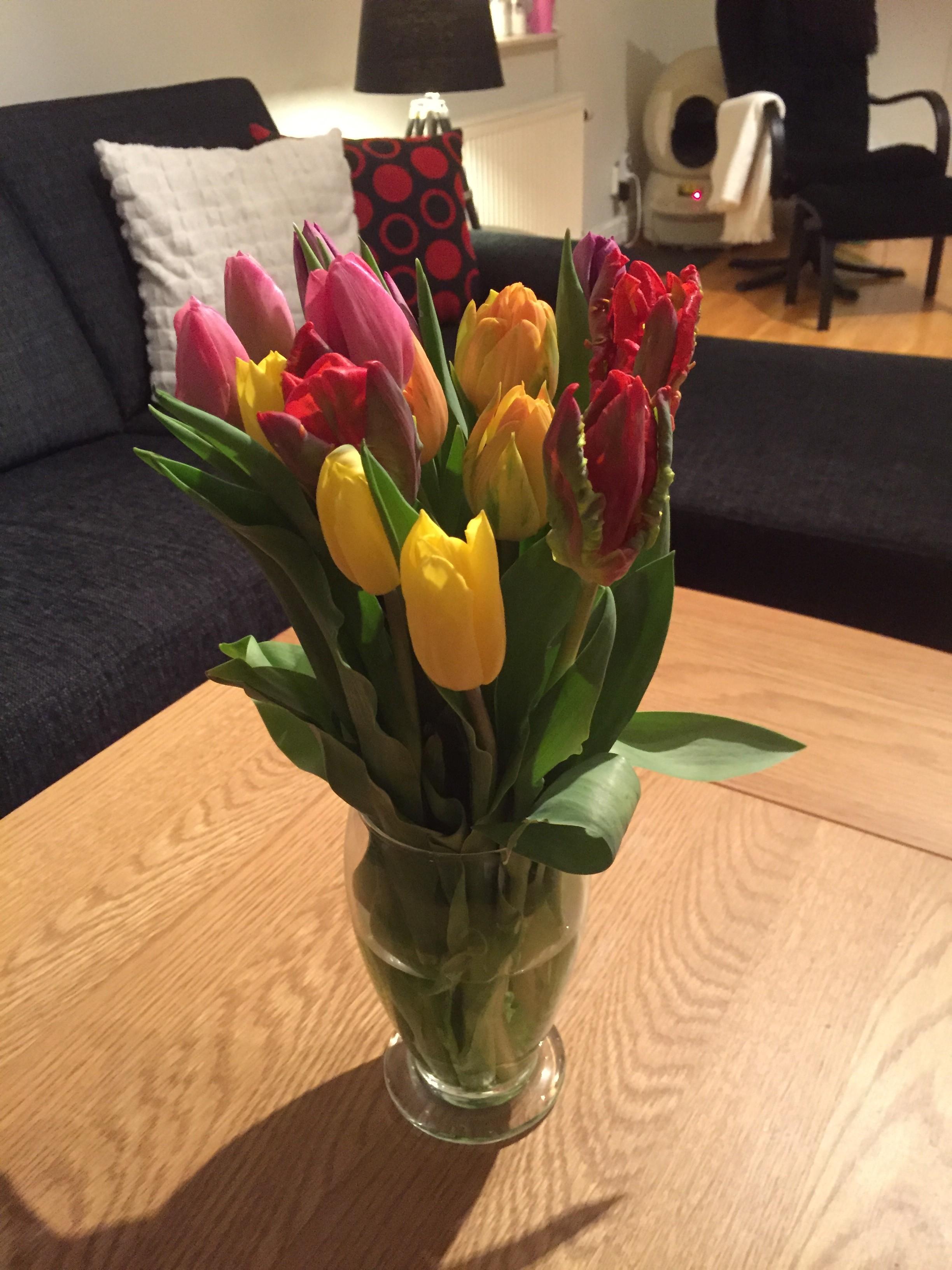 Tulpaner=vårkänslor