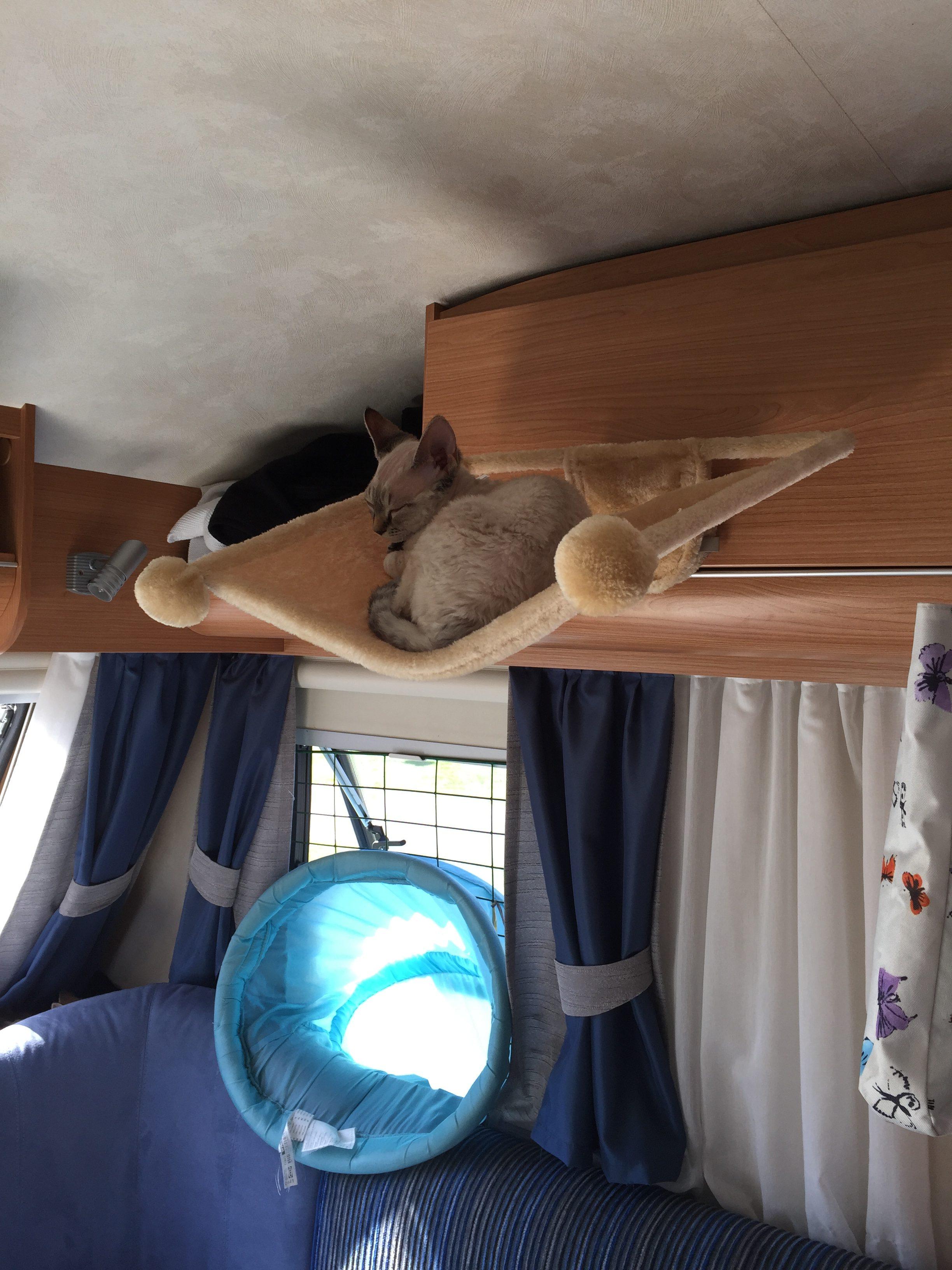 Trivsamma platser för katter i husvagn.
