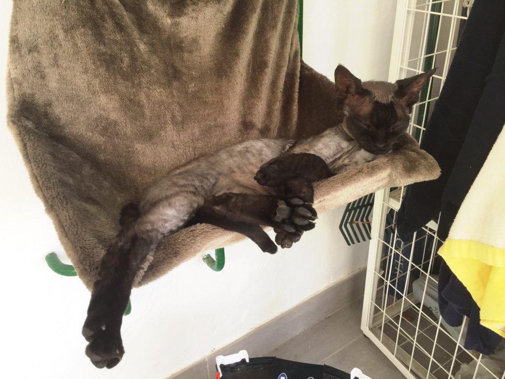Lucas slöar i hängmattan (som egentligen är en elementsäng). Katterna älskar Gran Canaria!